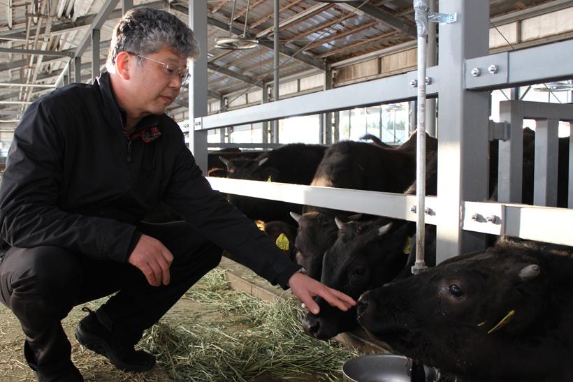 *増田さんと人懐っこい牛たち