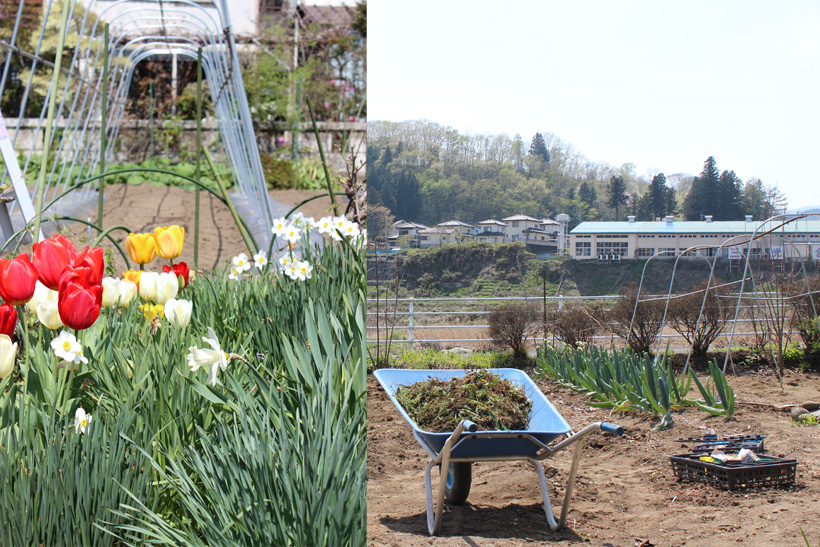 *Kumiさんの畑は無農薬、少量多品種の野菜や花が育つ