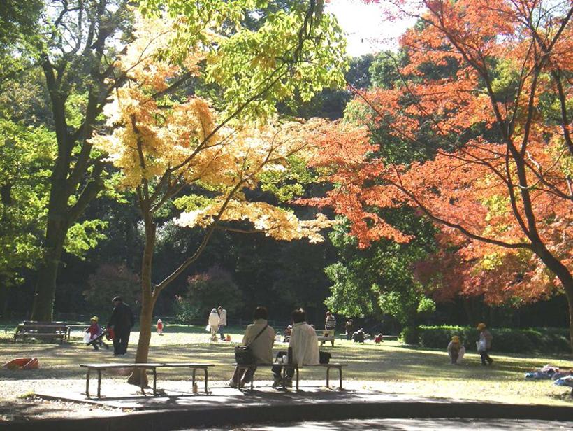 *群馬の森敷地内。秋には木々が紅葉する。