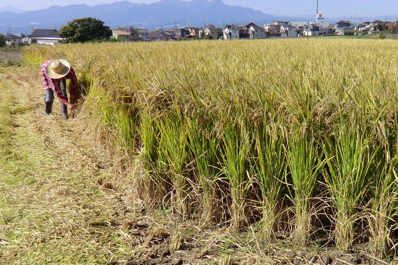 *小林農園の古代米を使用