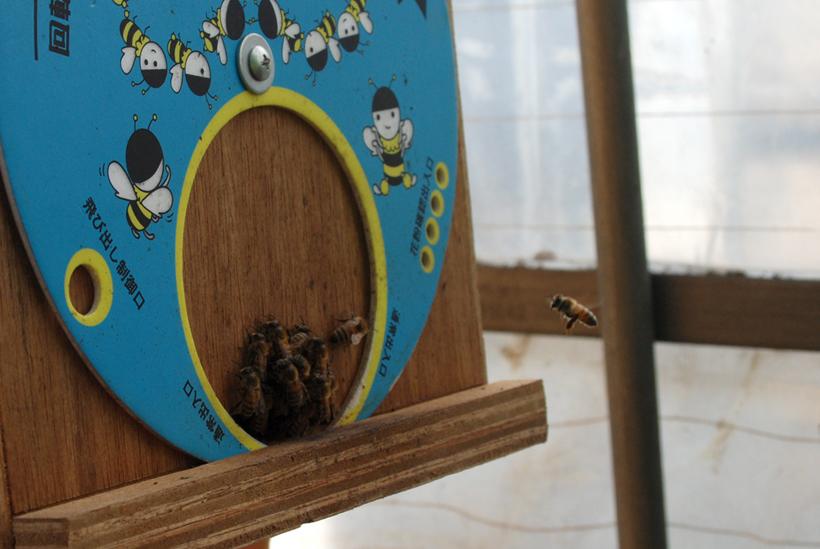 *ハウスの中に設置された養蜂箱
