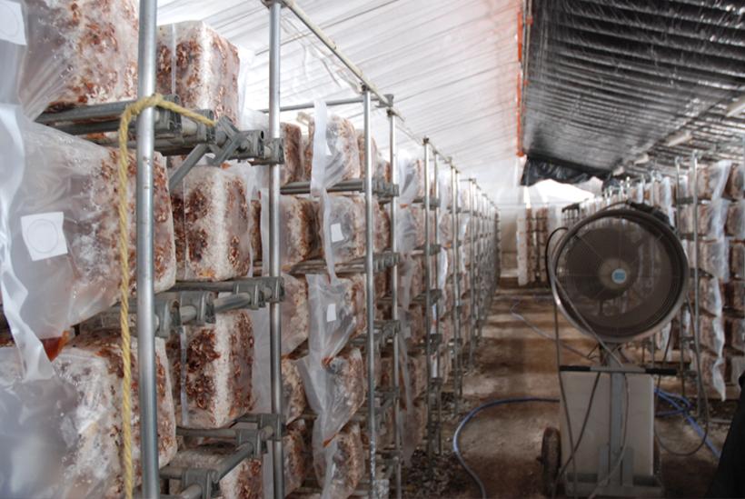 *しいたけ菌が活動しやすい湿度・温度を保ったハウスの中で培養される