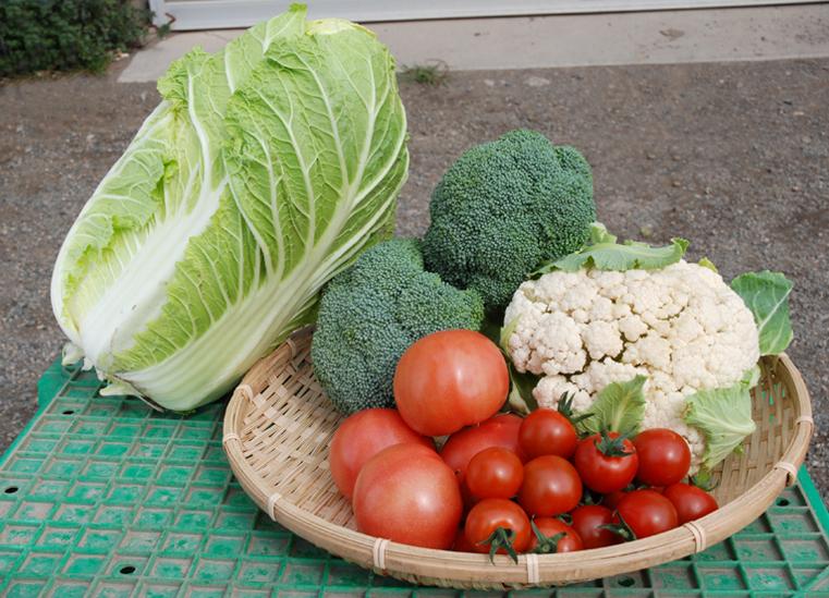 *トマトの他、ブロッコリー、カリフラワー、白菜なども