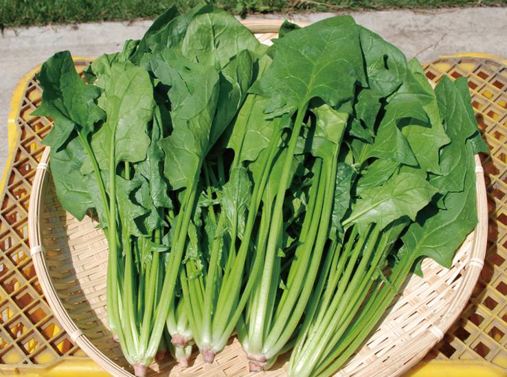 *ほうれん草 1束200g 時期によって価格は変動 旬…11〜2月 食べ方…おひたしにして塩で食べるのがオススメ 栄養…鉄分、βカロテン、ビタミンC、カリウム等