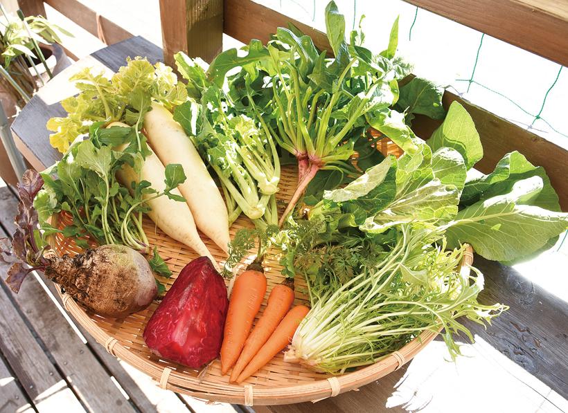 *大根、小松菜、ほうれん草、ルッコラ、かき菜、 人参、ビーツなども販売中