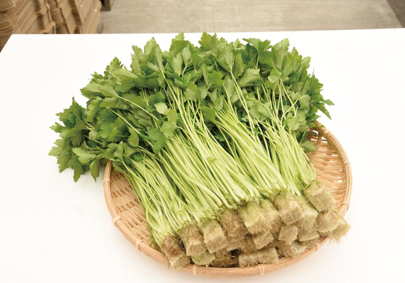 *みつば  販売時期…一年中 食べ方…天ぷらにして塩で食べるのがおすすめ  栄養…βカロテン、カリウム、鉄分