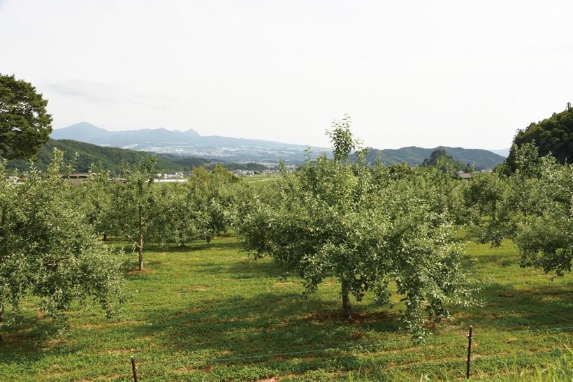*りんご畑