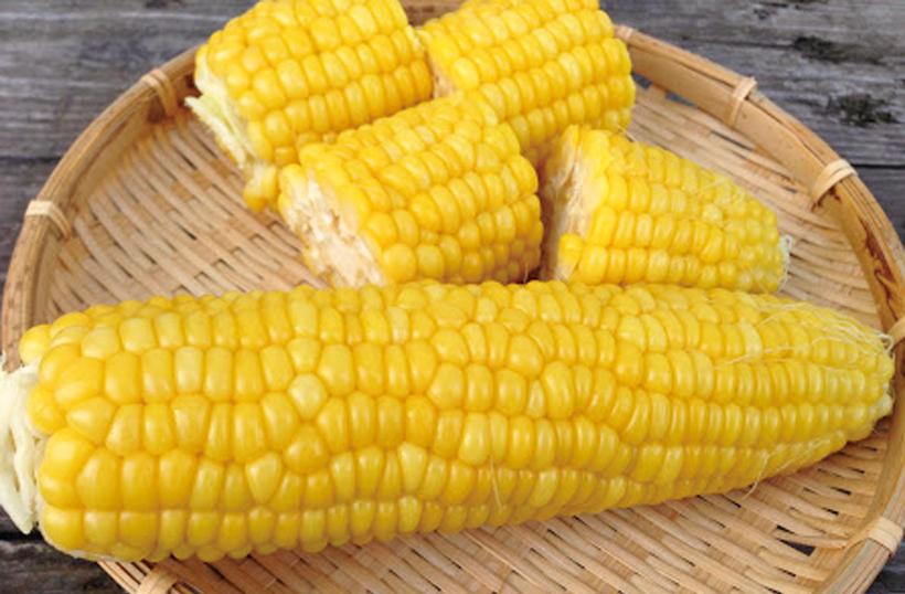 *とうもろこし 販売時期…7月下旬〜8/10頃 食べ方…茹でてそのまま、とうもろこしご飯、天ぷら 栄養…炭水化物、食物繊維、ビタミンB1、ビタミンB2、ビタミンE、ミネラル