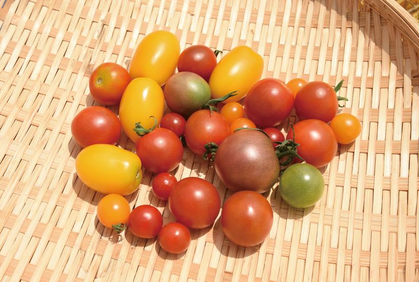 *様々な種類のミニトマト