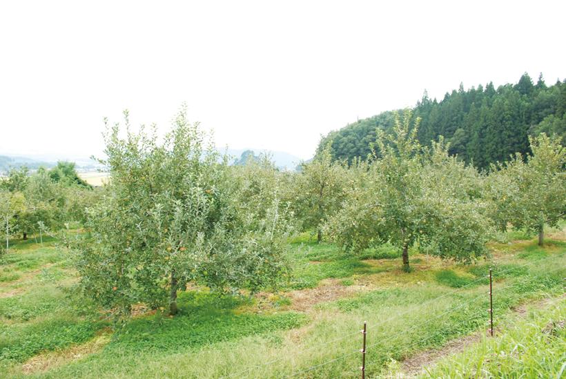 *りんご園