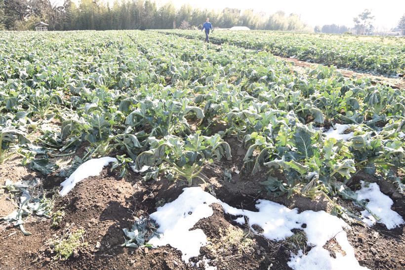 *取材時は畑に雪が残っていた