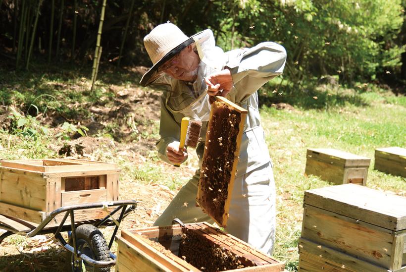 *ミツバチが紛れ込まないよう、箒ではらう