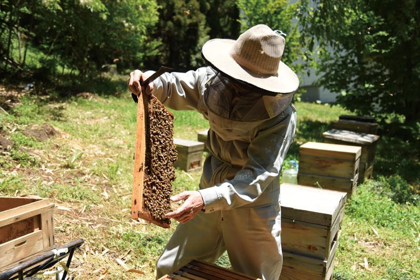 *木箱から蜂の巣をとる様子