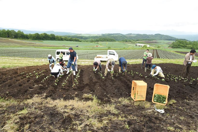 *「嬬恋ハートキャベツ畑プロジェクト」 愛妻の丘で開催された植え付け体験