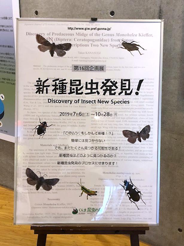 新種昆虫5