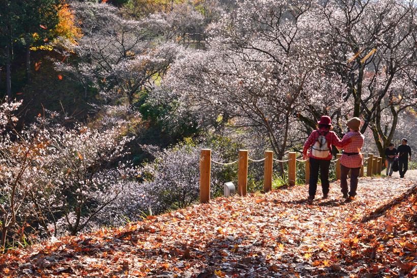 桜山公園28