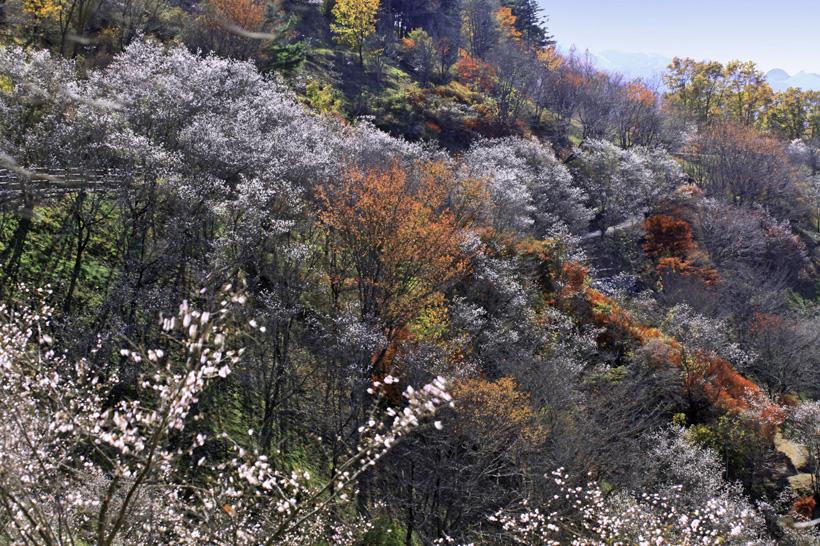 桜山公園17