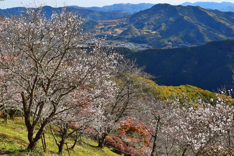 桜山公園5