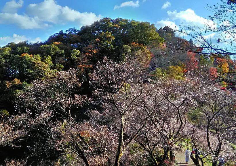 桜山公園4