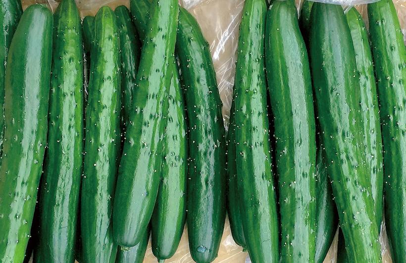 *朝採りきゅうり 販売時期…1月中旬〜7月上旬 食べ方…丸かじり、サラダ、漬物 栄養…カリウム、ビタミンK、ビタミンC、食物繊維 等