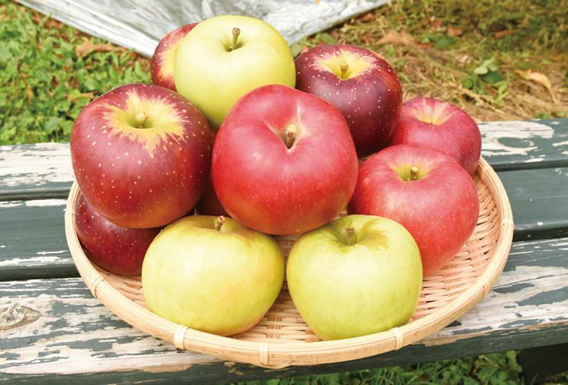 *りんご 販売時期…9月上旬〜12月上旬頃 食べ方…そのまま 栄養…カリウム、カロテン、ビタミンC 等