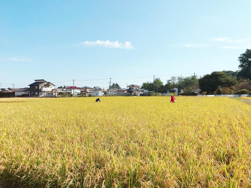 米達磨_農園風景(4)